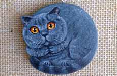 Blue British Cat