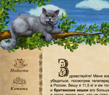 Britishcat cattery